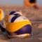 Beachvolleyballturnier am 16. und 17. Juni 2018